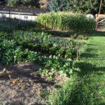 August 2016 garden